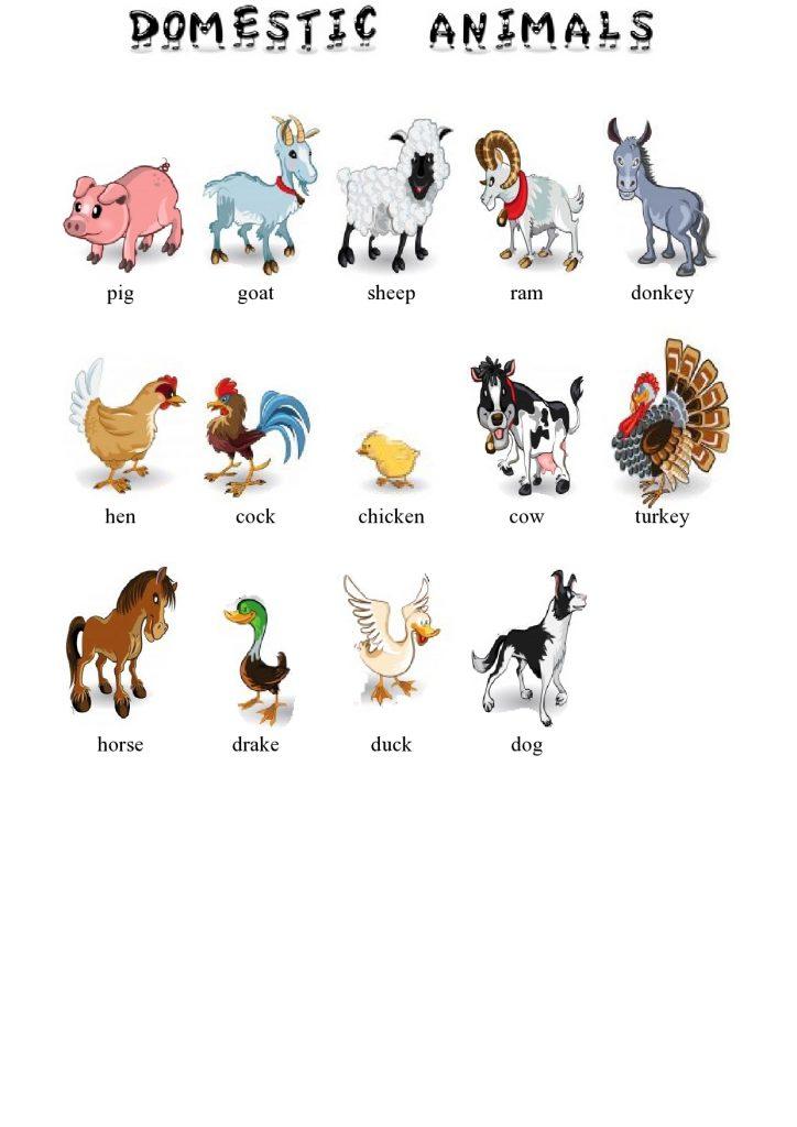 Haustiere im Englischen