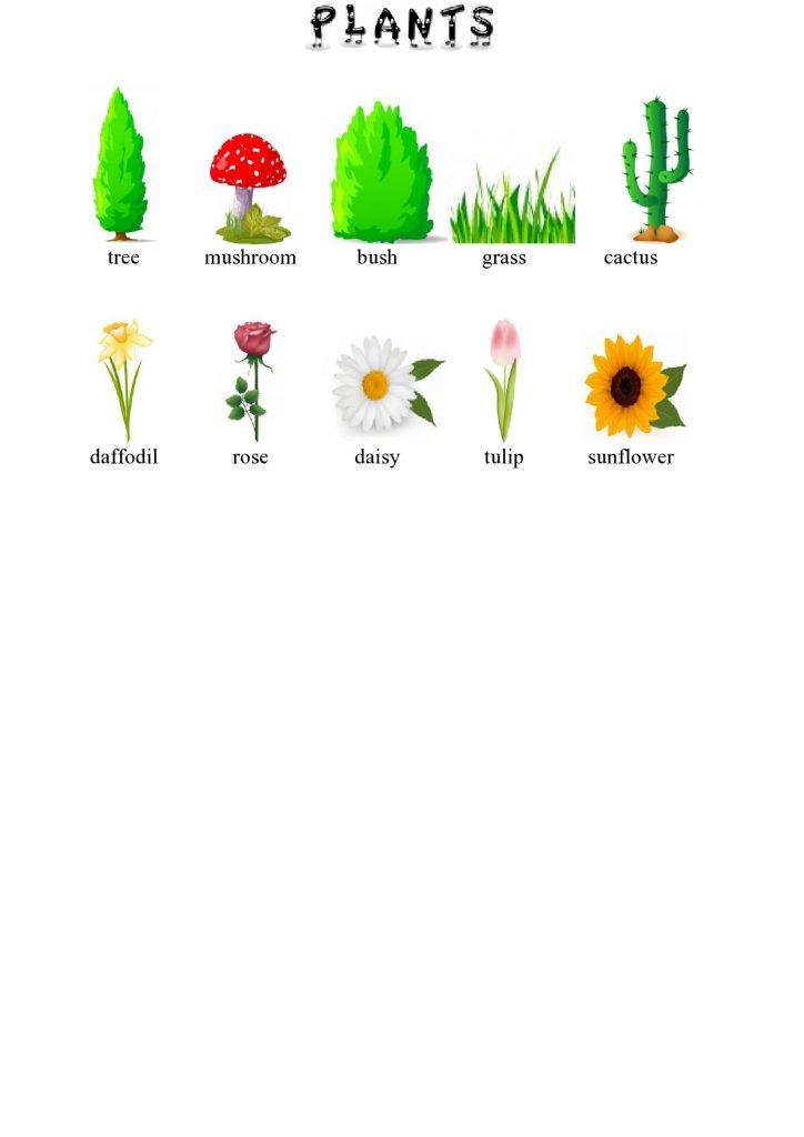 Pflanzen im Englischen